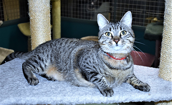 <strong>PET OF THE WEEK &#8211; February 1, 2018</strong>