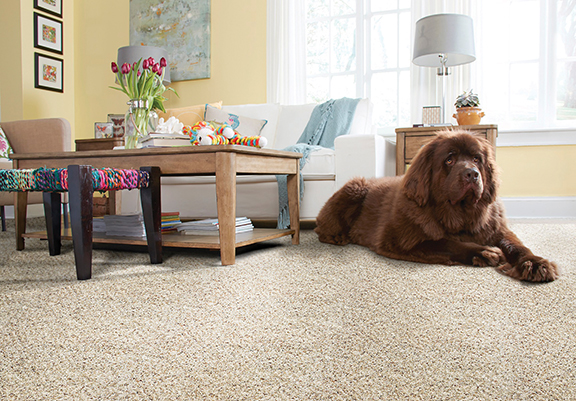 <strong>Pet owners: Tips to maintain a beautiful home</strong>