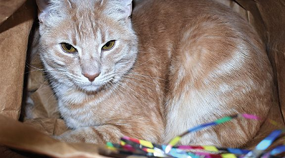 <strong>PET OF THE WEEK &#8211; May 17, 2018</strong>