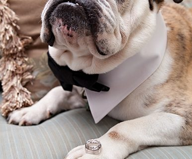 <strong>Factors to consider before  including Fido in your wedding</strong>
