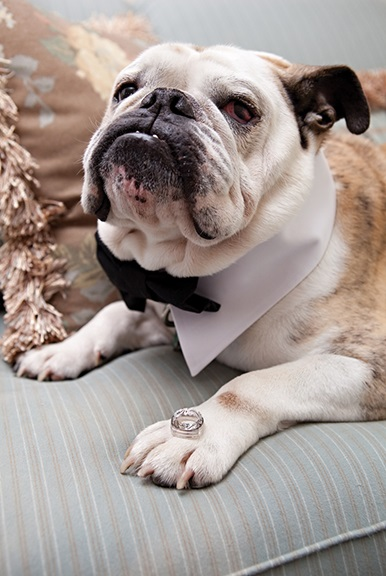 Factors to consider before  including Fido in your wedding