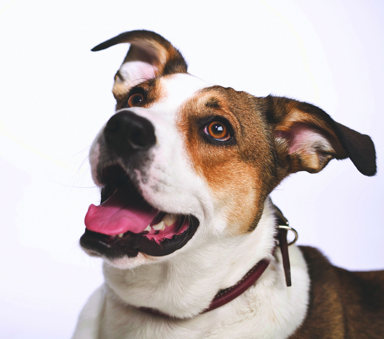 Reasons a mutt should be  your next dog