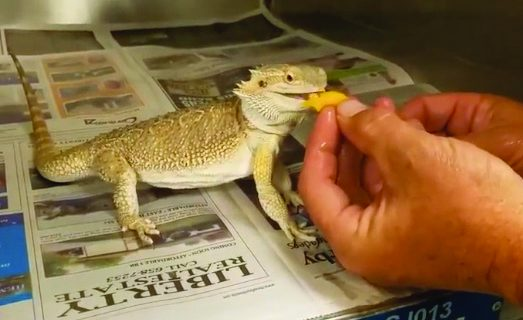 <strong>Hemet couple gets package with scaly stowaway</strong>