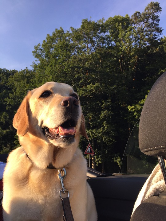 Safety first when driving with pets in the car